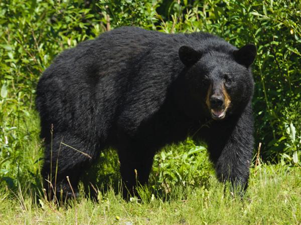 Un cazador es atacado por un oso mientras dormía en un bosque de Idaho