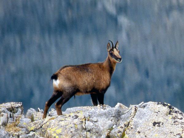Publicados los planes de caza de las reservas aragonesas - CazaWonke - Caza y Safaris, tu diario de caza.