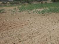 Agricultores zamoranos vuelven a quejarse de daños por conejos