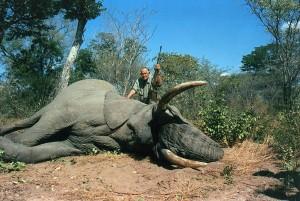 Elefante en Botswana.