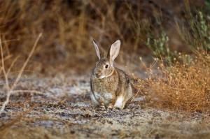 La carne de conejo, imprescindible en una dieta saludable