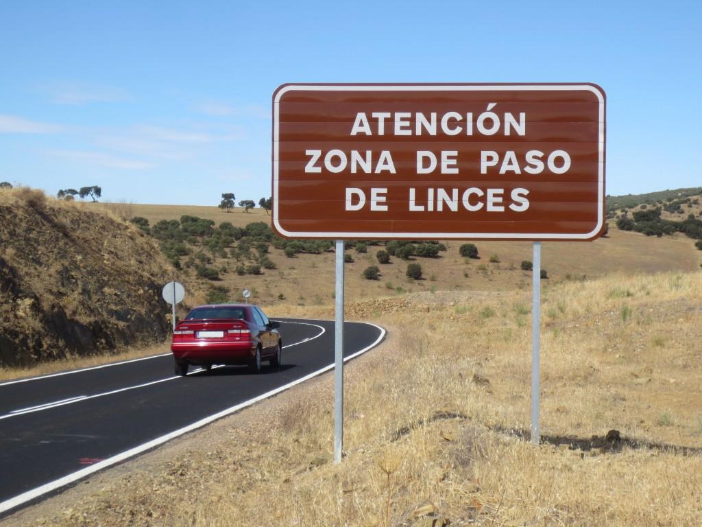 WWF celebra el arreglo de carreteras para disminuir atropellos de linces