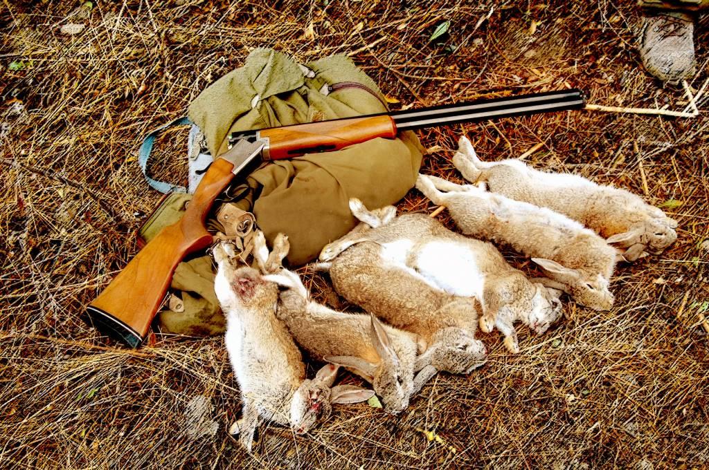 percha conejos