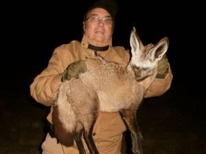 bat eared fox sudáfrica zorro de orejas de murciélago marcial gómez sequiera