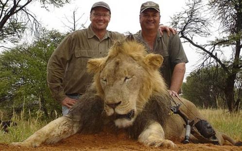 Intimidaciones y amenazas de muerte contra el cazador del león 'Cecil'