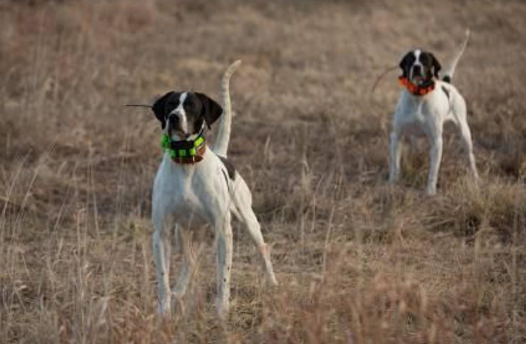 Máximo control de los perros con los dispositivos de rastreo de Garmin