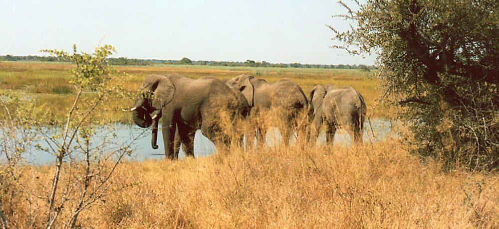 Tanzania suspende la exportación de trofeos de caza con CITES