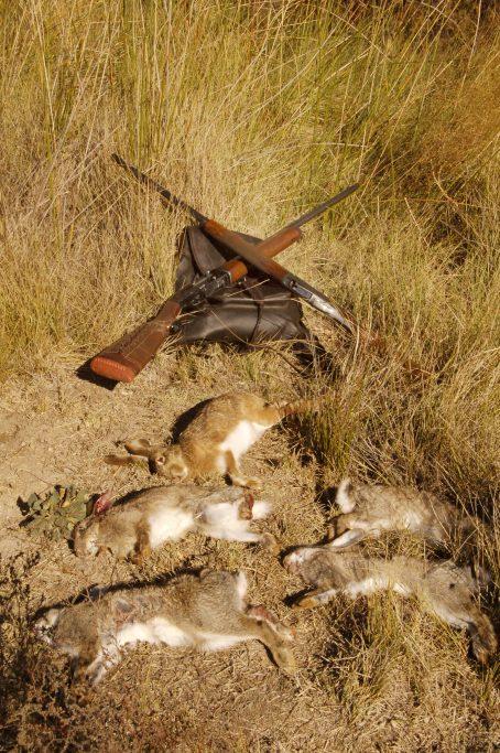 Conejo y liebre c mo se presenta la temporada de caza - Como cocinar liebre ...