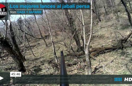 Vídeo con los mejores lances al jabalí persa