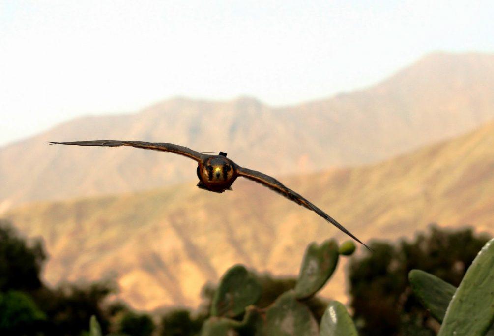 2 cetreria aves de Peru y Chile