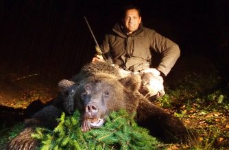 Descubriendo los Cárpatos: oso pardo en Rumanía