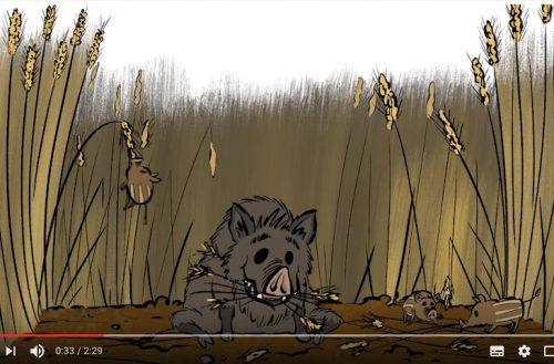 ¿Qué es la caza y qué es lo que hacen realmente los cazadores?