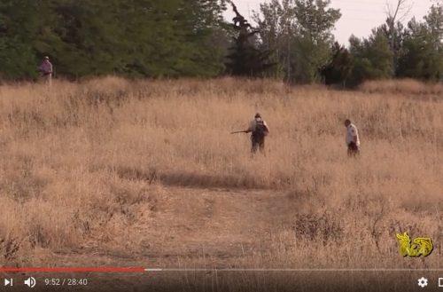 El gancho de conejos (La caza del conejo en batida)