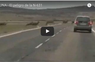 Vídeo de ciervos en carretera agudiza debate sobre accidentes
