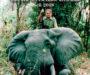'Marfil. La caza del elefante africano en 2018', de Tony Sánchez-Ariño