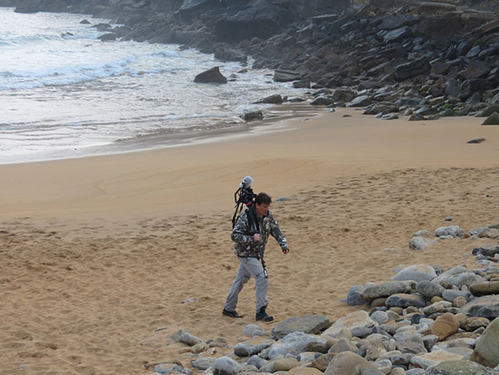 corzos contra el mar