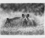 'Mayo', del libro 'Días de campo, caza y fogones'. Por Vicente Amat