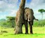 Botsuana reabre la caza en el país, tras cinco años de prohibición