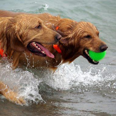 Real Sociedad Canina