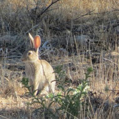 gestión del conejo