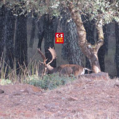 caza pura