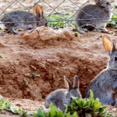 conejos un problema
