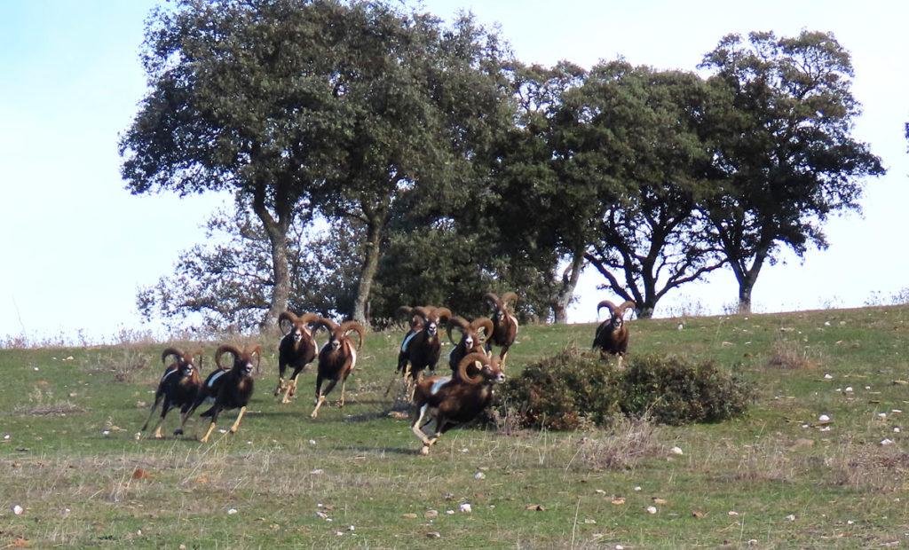 de Hunters Hispania