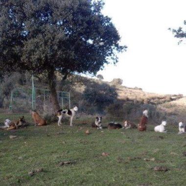 campo español