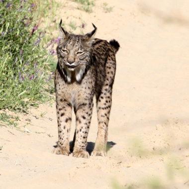 cazadores andaluces rechazan
