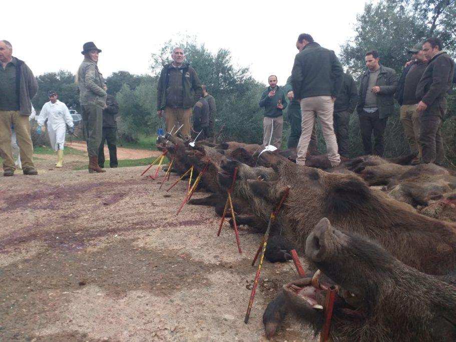 convivencia y caza