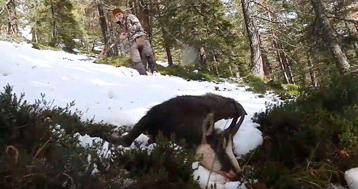 genuino cazador