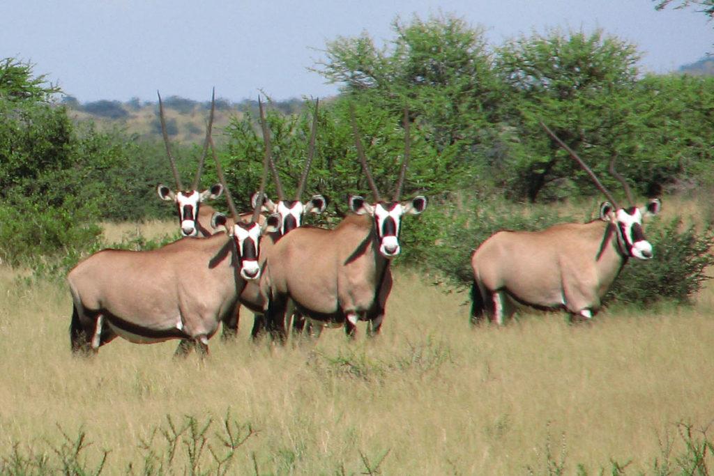 Namibia restringirá