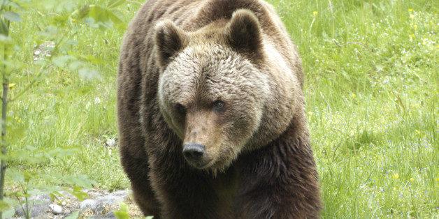 conflictos con osos