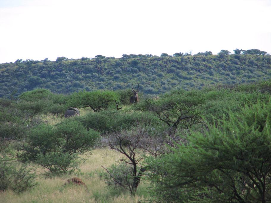 Diario atípico de un safari
