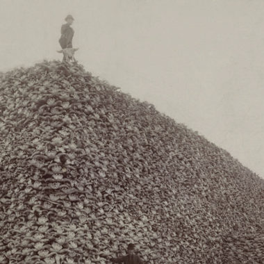 el bisonte