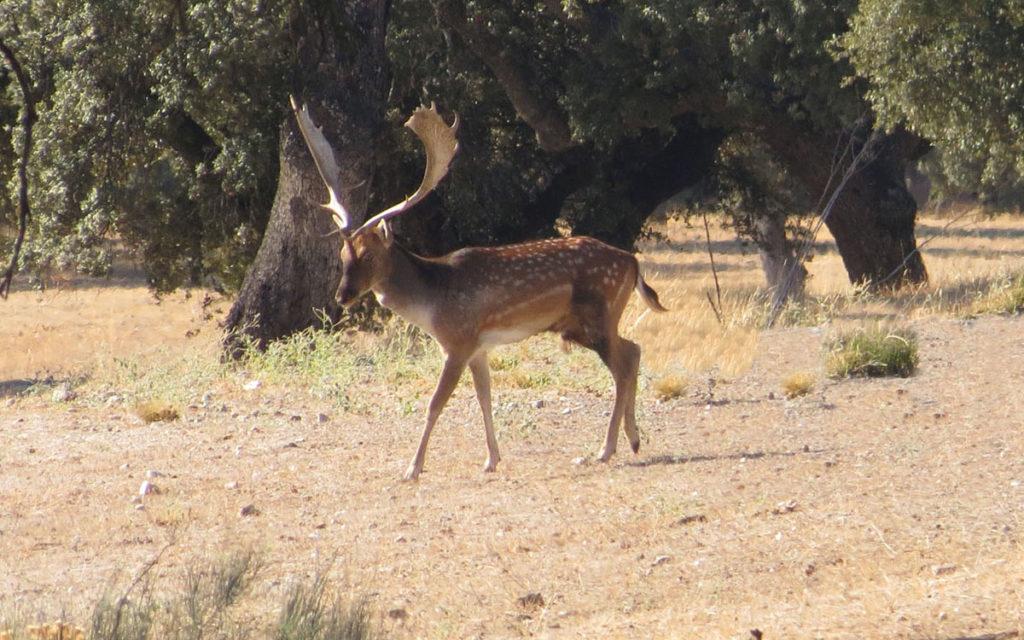 cazar en Madrid