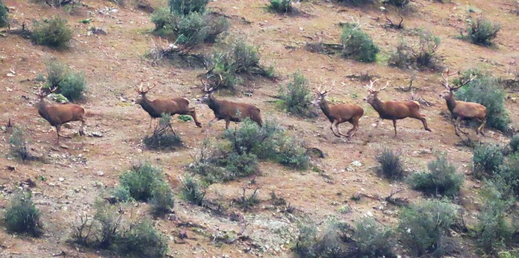 desplazmamientos de los cazadores Andalucía