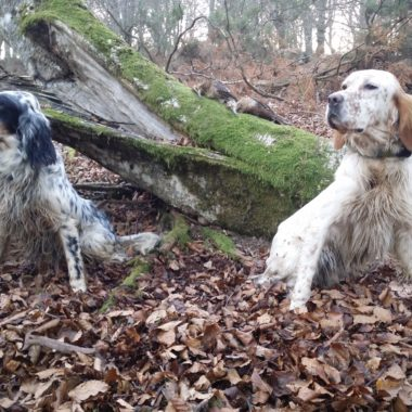 perros de muestra en montaña