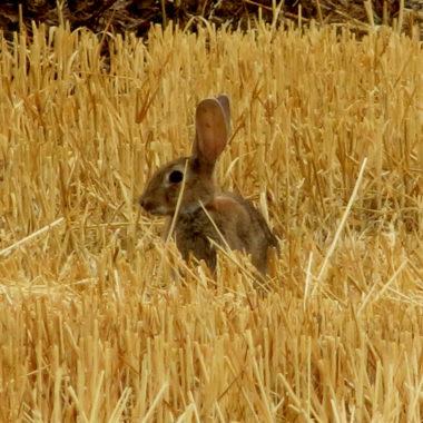 conejos daños inasumibles
