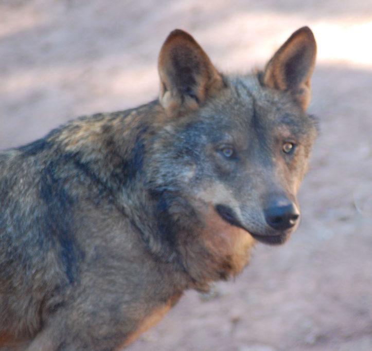Va de lobos