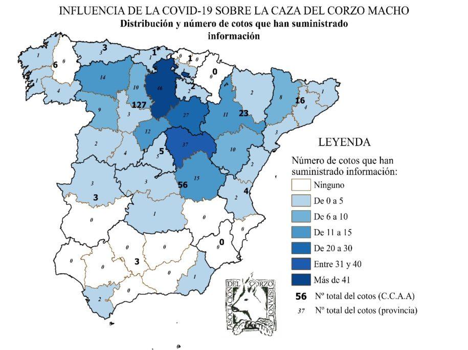 coronavirus corzo ACE