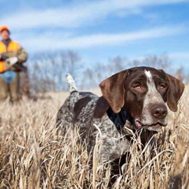 intergrupo perros de caza