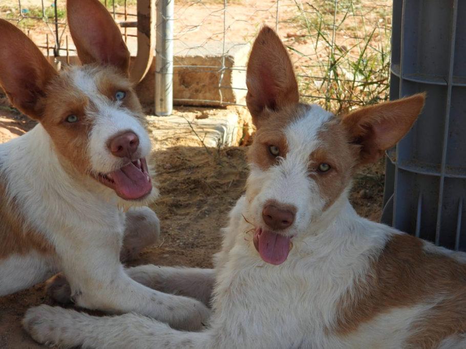 La RFEC Protección Animal