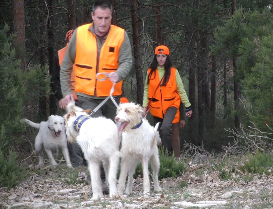 ARRECAL Ley de Bienestar Animal