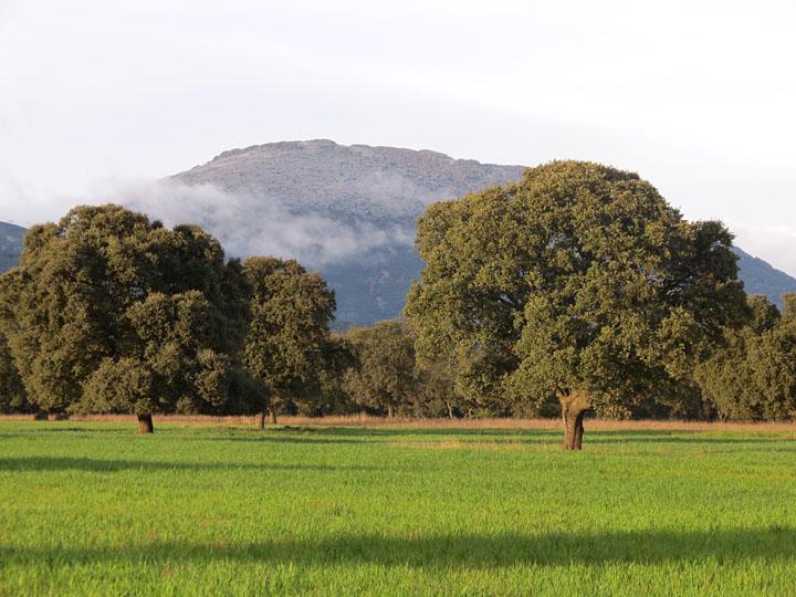 Un corzo en Montes de Toledo.
