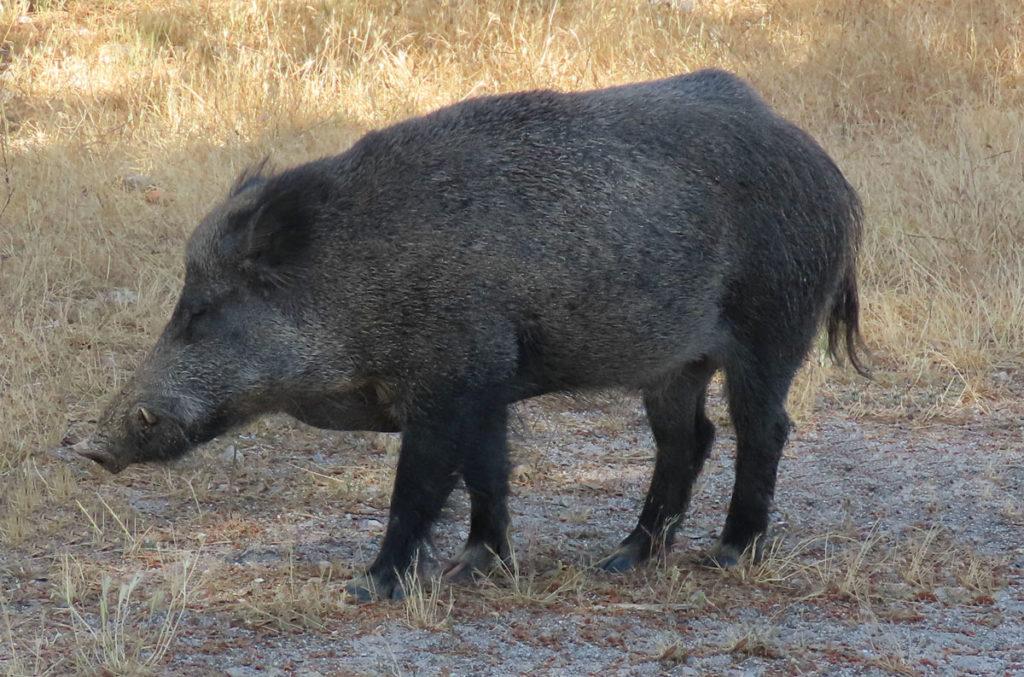 orden de vedas de caza en Castilla-La Mancha
