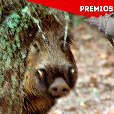 Nominadas-jabali-2020-2021.-Caza-y-Safaris-Wonke